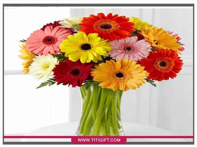 آشنایی با گل ژربرا