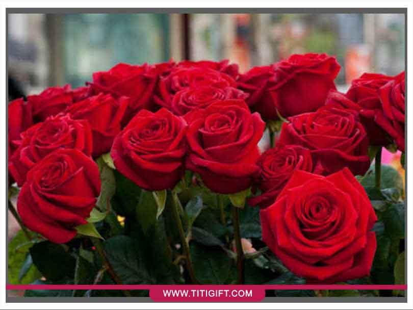 آشنایی با گل رز