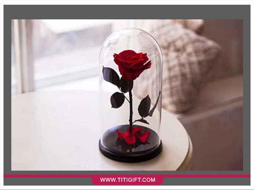 آشنایی با گل رز جاودان