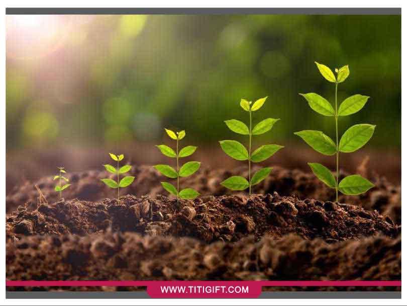 نیاز ها و شرایط محیطی گیاهان برای رشد چیست؟