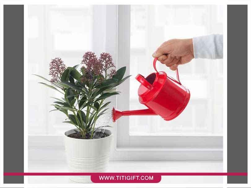 نحوه صحیح آبیاری گیاهان آپارتمانی