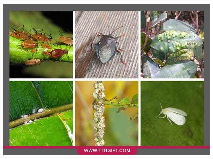 شناسایی آفات گیاهان آپارتمانی