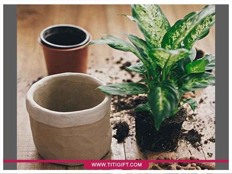 روش صحیح تعویض گلدان گیاهان آپارتمانی چیست؟