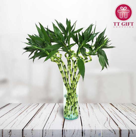 فروش آنلاين گل بامبو تایلندی همین امروز تهران و کرج