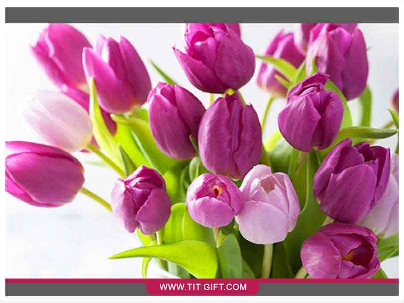 آشنایی با گل لاله