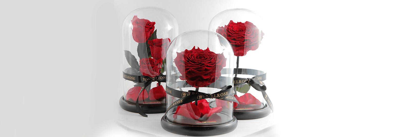 ارسال گل رز جاودان ارزان