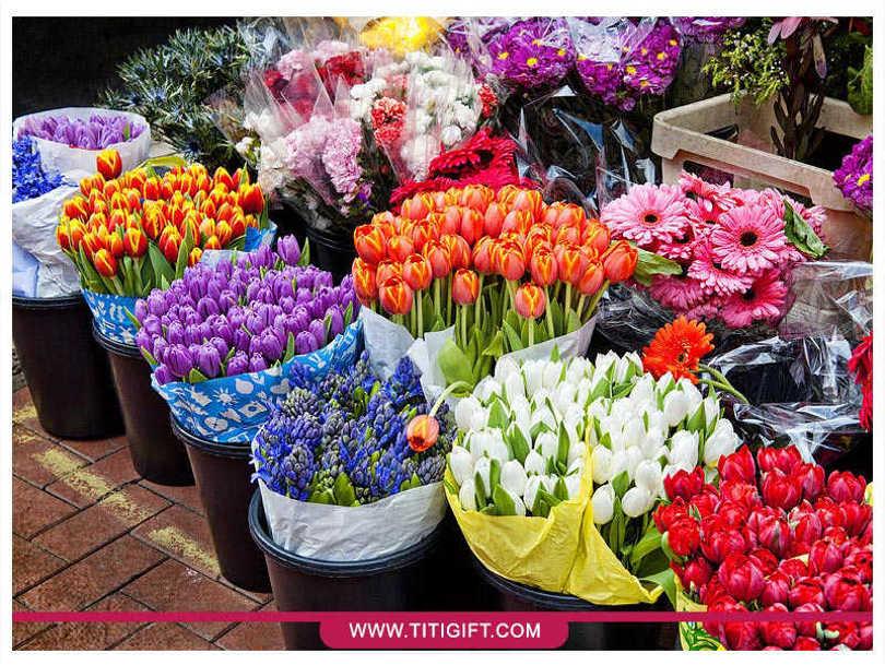 خرید آنلاین گل و گیاه